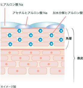 トリプル・ ヒアルロン酸の3つの複合保水のしくみ